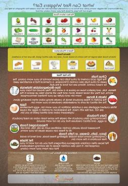 """What Can Red Wigglers Eat?"" 13x19"" Infographic Poster for L"