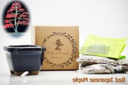 9GreenBox - Red Japanese Maple Bonsai Seed Kit- Gift - Compl