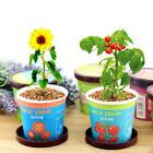 Mini Potted Bonsai Office Desktop Sunflower Plant Seed Start