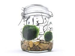 Aquatic Arts Terrarium Kit With Live Marimo Moss Balls - Lar